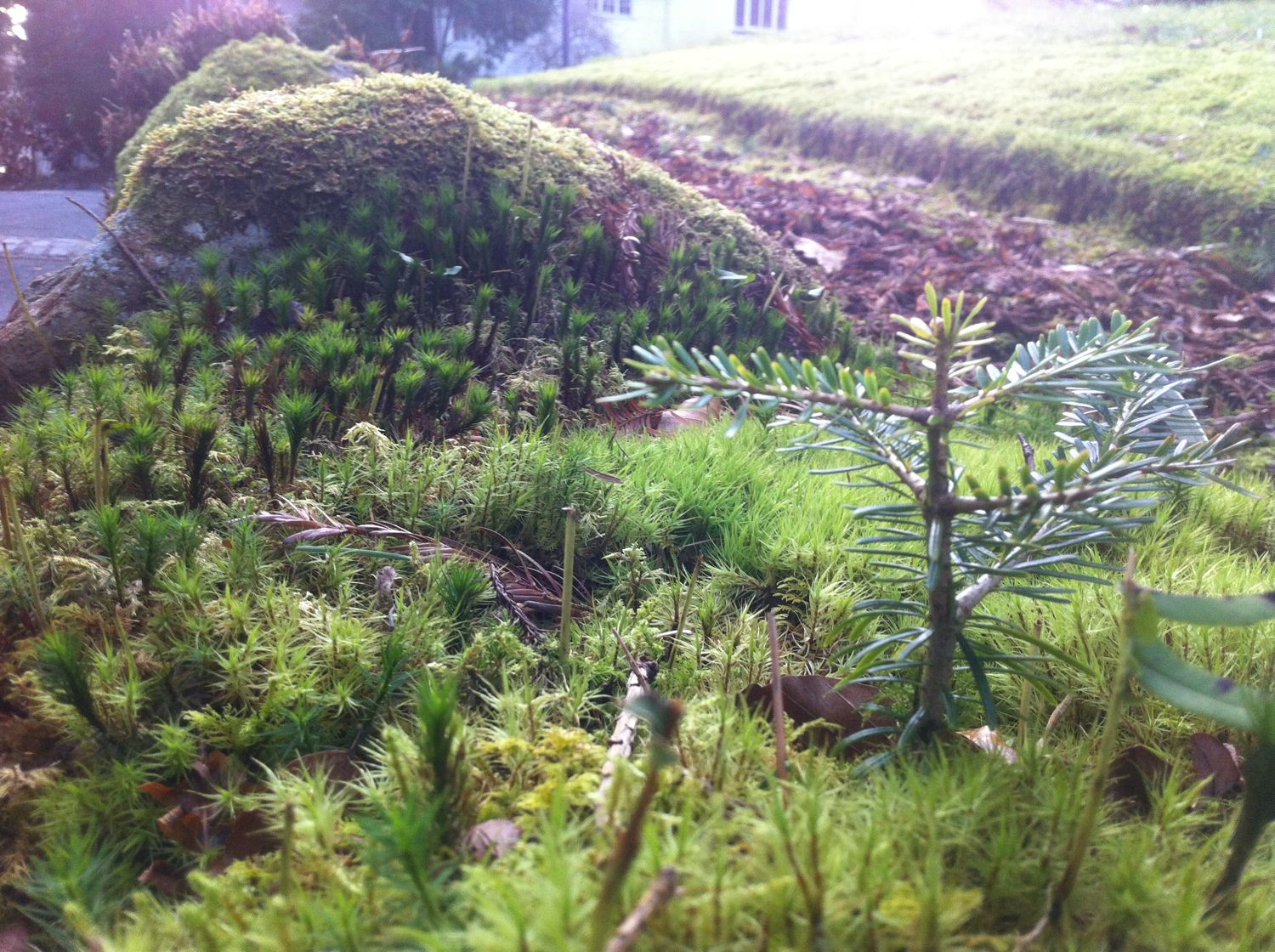 Miniature forest worlds - the mosses on a stone