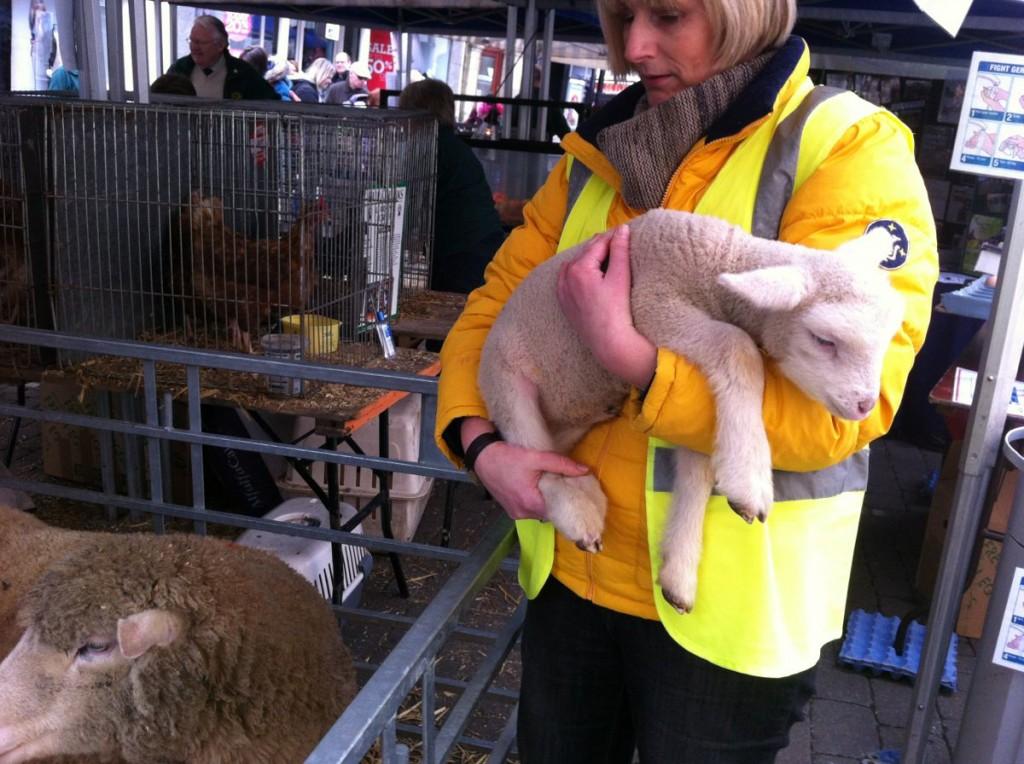 The Lambs