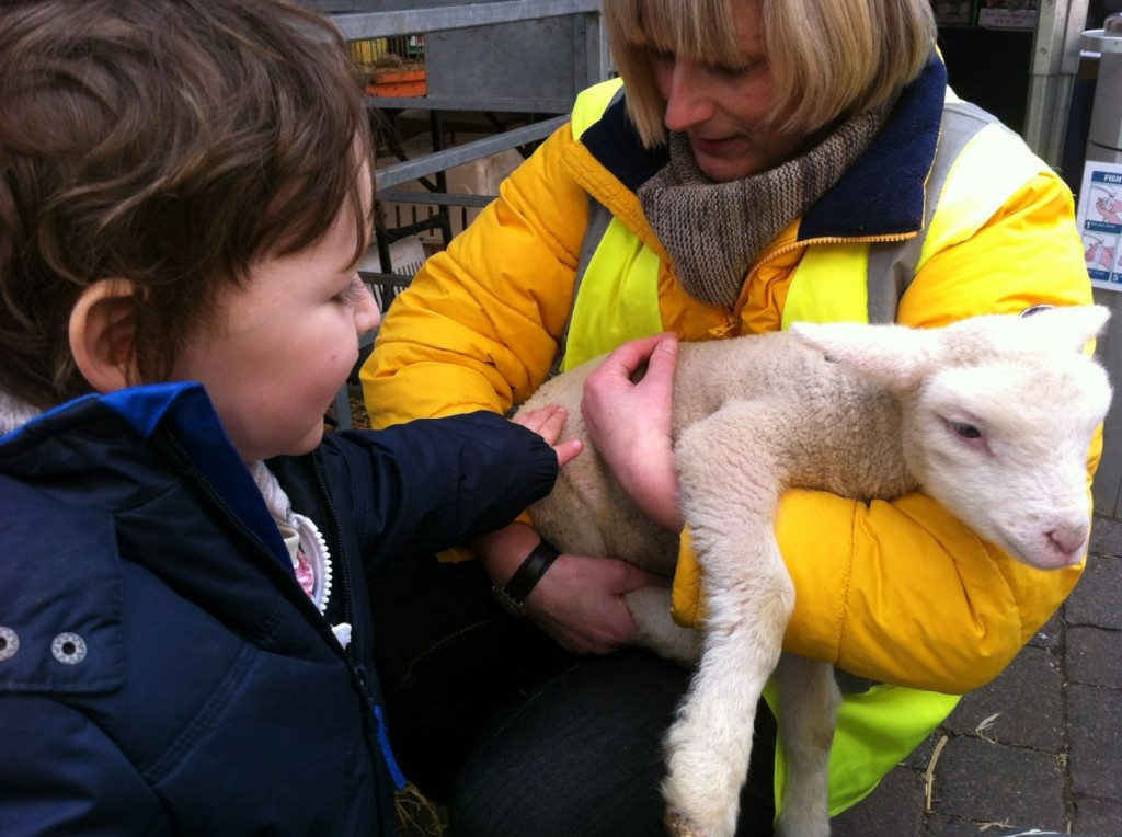 Ben gets to stroke a Lamb